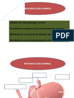 11 Microbiologia Ruminal (2) Teórico
