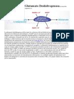 La Reacción de Glutamato DeshidrogenasaLa Reacción Catalizada Por La Glutamato Deshidrogenasa Es