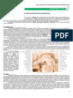 10 - Anatomia Macroscópica Do Diencéfalo