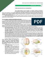 13 - Anatomia Macroscópica Do Telencéfalo