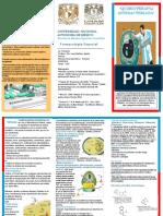 Triptico Quimioterapia Antibacteriana PDF