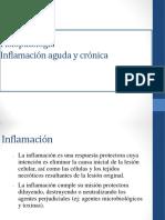 fisiopatología inflamación