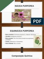 EQUINÁCEA PURPÚREA.pptx