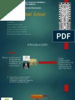 Test Del Arbol