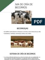 2. SISTEMA DE CRÍA DE BECERROS.pptx