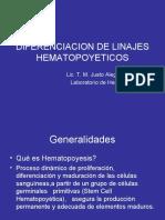 Diplomado 2008-Diferenciacion de Linajes Hematopoyeticos