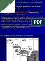 Curs_14_Biomecanica tendoanelor si ligamentelor.ppt