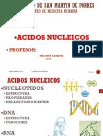 Ac.nucleicos 16 i
