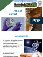 6 Microbiota Normal