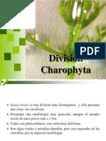 5 Charophyta 2016.pdf