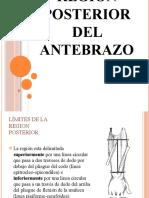 Posterior Antebrazo