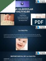 Las Glándulas Salivales. Educacion en Salud Oral