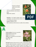 Herbario plantas chilenas