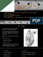 Tarea 1 Estructura Trigo - Cebada.