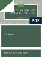 Algas de Importancia Comercial en Chile