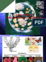 Bacterias 2005 i i b