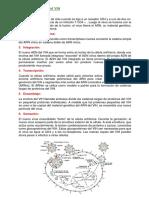 Fases Del Ciclo Vital Del VIH (1)