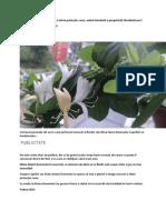 Planta Care Aduce Bunăstare Și Oferă Protecție Casei