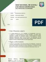 Exposicion de Entomologiaagricola