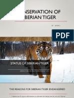 conservation of siberian tiger