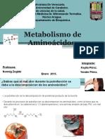 1metabolismodeaminoacidos-150801162139-lva1-app6892.pptx