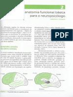 Capítulo 2 neuropsicologia