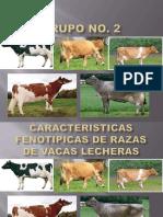 características de razas de vacas