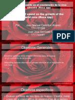 Efecto Del Sonido en El Crecimiento de Las Rosas