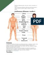 O Corpo Humano é Constituído Por Diferentes Partes