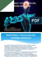 Ánatomia y Fisiología Del Sitema Nervioso