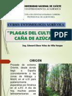 6.5. Plagas Del Cultivo de Caña de Azucar