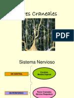Pares Craneales (1)