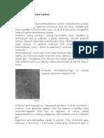 Nukleotidi i Nukleinske Kiseline