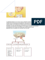 La Glándula Pituitaria.docx