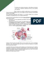 Los Alveolos2