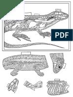 recortables_reptiles_bn.pdf