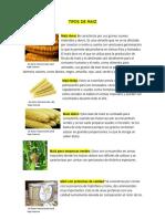 Tipos de Maiz