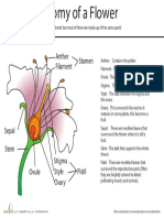 anatomy-of-flower.pdf