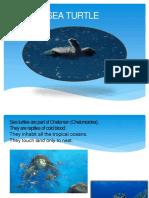 exposicion de Tortuga marina en Ingles