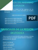 Musculos del los miembros superiores