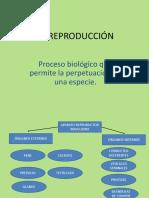 APARATOS REPRODUCCIÓN (2).pptx