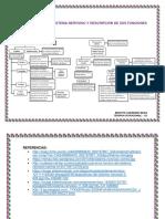Clasificación Del Sistema Nervioso y Descripción de Sus Funciones