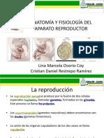 anatomiayfisiologiasistemareproductor-110616202645-phpapp02