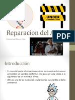 4.3 Reparacion Del ADN