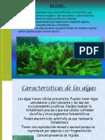 Exp Algas Microbiologia