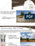 06 the Technical Framework of Truffle Cultivation
