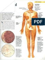 014 - Sistemul limfatic.pdf