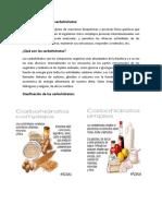 metabolismo carbohidratos