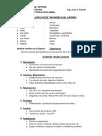 CLASIFICACIÓN TAXONOMICA DELCAPRINO.pdf
