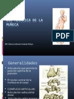 biomecanicademuecamarcoalvarez-140907114302-phpapp02